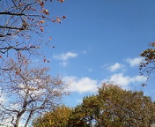 本日青空〜公園日和なり