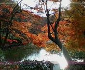 薬師池の紅葉〜綺麗だな〜☆